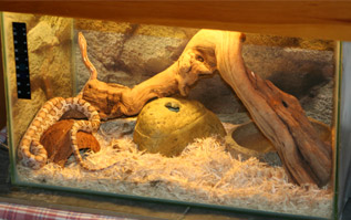 Vivarium set up for a yearling corn snake